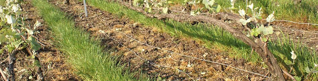 Les 6.8 hectares de vignes AOC Champagne que nous travaillons se situent sur la commune de Troissy-Bouquigny près de Dormans en plein cœur de la vallée de la Marne