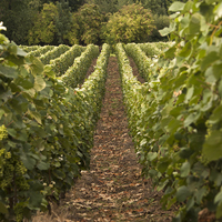 Parcelle de vigne Les Gondottes