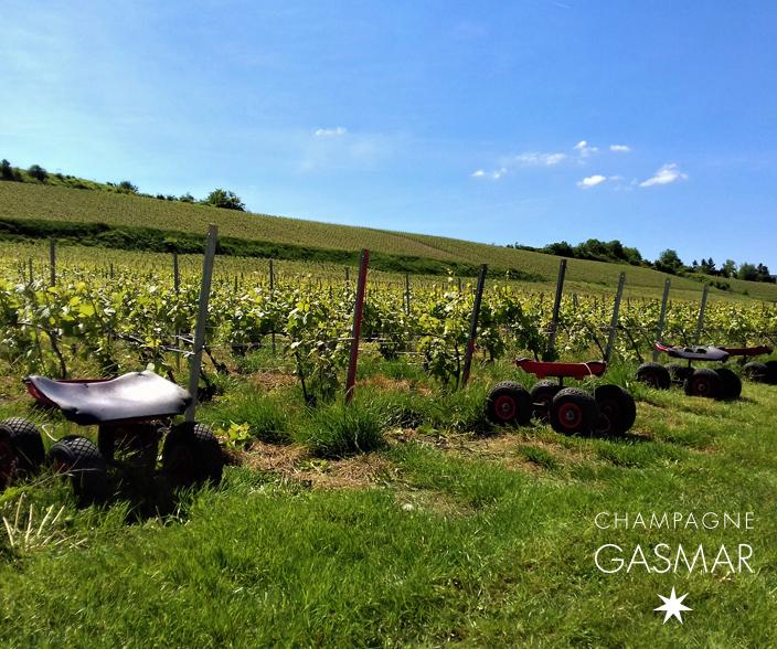 Ebourgeonnage des pieds de Chardonnay et Pinot Noir