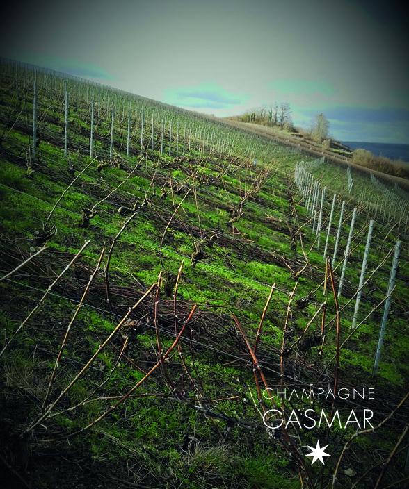 Les vignes du champagne Gasmar à Troissy Bouquigny dans la Marne.